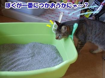 新しい猫砂つかおうかな~.jpg
